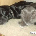 Собака и кот друзья фото