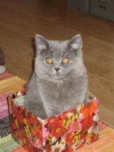 кот подаок, кот в коробке