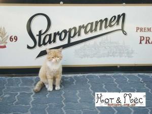 Кот рекламирует пиво фото