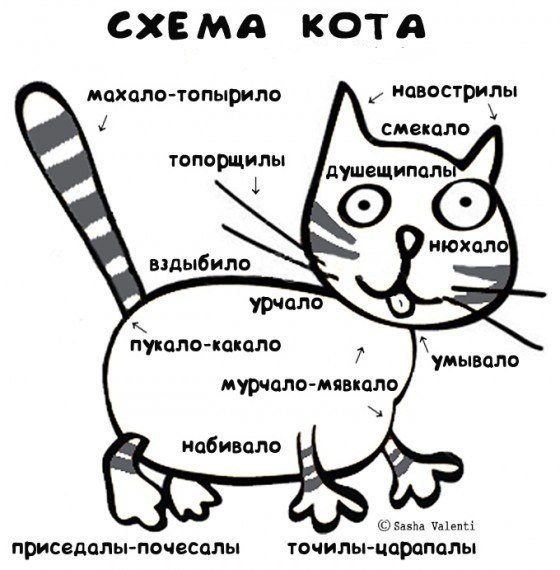 Схема кота