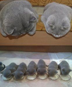День кота 22 февраля